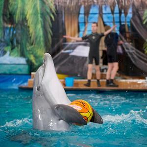 Дельфинарии, океанариумы Коммунара