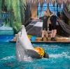 Дельфинарии, океанариумы в Коммунаре
