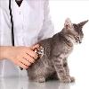 Ветеринарные клиники в Коммунаре